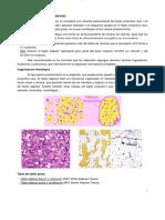 anatomia e histologia del tejido adiposo