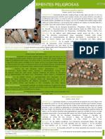 05. Guia Reptiles EstacionesYPFB