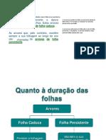 trab diogo 1.docx