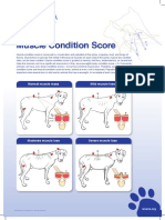 Muscle-condition-score-chart-2013-1