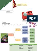 Leucocitos y Valoración de la inmunidad humoral.pptx