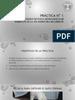 Práctica N° 1  BPNM.pdf