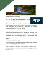 DESCRIPCIÓN DE LA GUACAMAYA