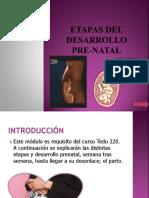 etapas-del-desarrollo-pre-natal