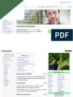 Uña de Gato - Uncaria tomentosa - Wikipedia, la enciclopedia libre