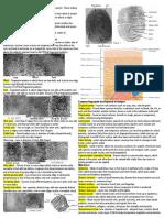 Forensics Cheat Sheet.docx