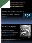 Dr FONSECA RISCO Desarrollo de Cara y Cuello ASTO GRADOS