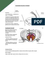 Diagrame Pelvien Et Perinee
