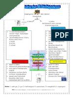 das-deutsche-schulsystem-arbeitsblatter-leseverstandnis_44990