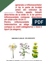 inflorescentele.pdf