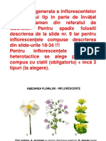 bioinflorescenteeco.pdf