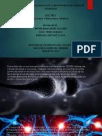 DIAPOSITIVAS NEURONAS.pptx