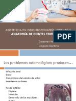 2. Anatomía de Dientes Temporales