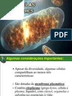 CITOPLASMA E ORGANELAS CITOPLASMÁTICAS.pptx