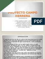 PROYECTO CAMPO HERRERA