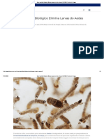 Novo Larvicida Biológico Elimina Larvas do Aedes Aegypti