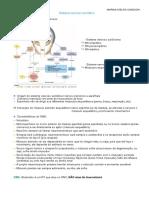 Sistema nervoso somático .pdf