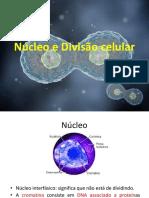 Núcleo e Divisão celular.pptx