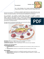 8. Fisiologia del ciclo menstrual