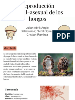 Hongos Julian.pdf