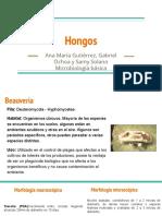hongos Ana Maria et al..pdf