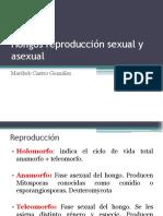 8. Hongos sexual y asexual.pdf