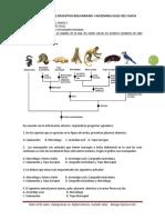 taller biología sobre evolución tipo icfes 2