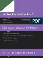 Activación de Linfocitos B.pptx