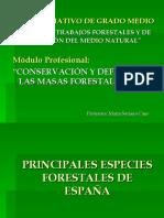 copia_de_principales_especies_forestales_de_espaa copia.pdf