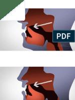 puntos articulatorios R y RR