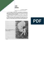 48 - Hacer adoptar corderos