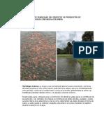 ANALISIS  DE VIABILIDAD  DEL PROYECTO  DE PRODUCCIÓN DE MOJARRA ROJA EN CARTAGENA COLOMBIA (1).docx