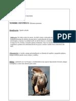 Aves y Otros Seres Del Galacho de Juslibol