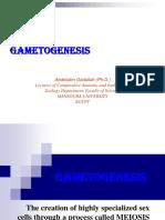 Gametogenesis (1).ppt