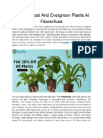Buy the Best and Evergreen Plants at FlowerAura