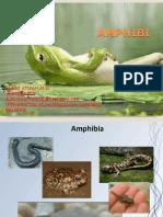 5-amphibia.ppt