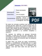 Caracteristicas de Los Delfines
