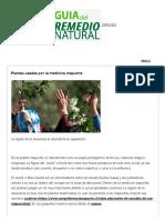 Plantas usadas por la medicina mapuche - Remedio Natural Farmacia Mapuche Makelawen