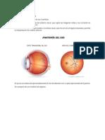 Anatomía del globo ocular.docx