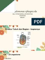 Chlamydomonas sphagnicola.pptx