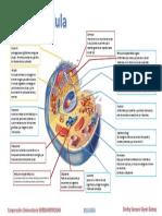 ACT-3-La Celula.pptx