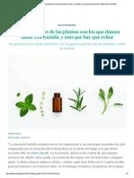 Cuatro venenos de las plantas con los que damos sabor a la comida, y uno que hay que evitar _ BuenaVida _ EL PAÍS