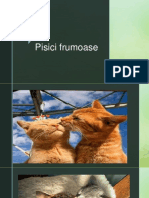 Prezentare pisici