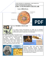 1. ESTRUCTURA Y FUNCIÓN CELULAR.docx