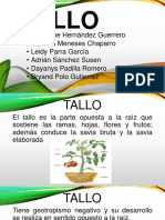 Diapositivas tallo-1