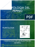 MORFOLOGIA DEL PEPINO.pptx
