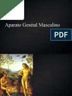 Presentación Aparato Genital Masculino