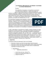 ACTIVIDAD DE LAS GRASAS BILA.docx