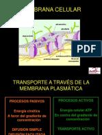 Célula -Transporte membrana.pptx