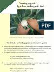 Growing organic School Gardens - University of Milan